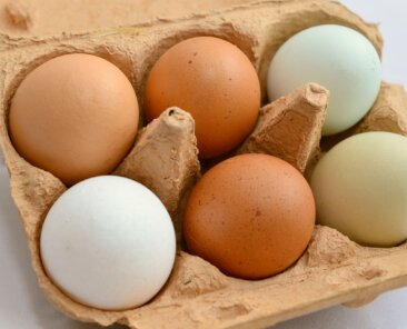 leyendas-urbanas-huevo